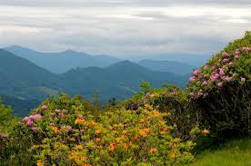 North Carolina Scenery images Scenery mountains usa rhododendrons north carolina nature flowers jpg