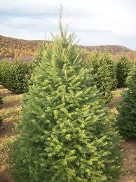 christmas tree bridgewater nj christmas lights decoration