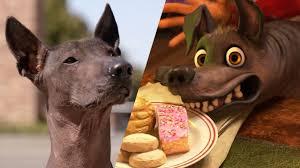 xolo tour of pixar animation studios national dog day youtube