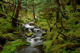 Alaska forest images Alaska wallpaper qygjxz jpg