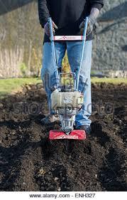 gardener rotavating a vegetable garden preparing the soil for