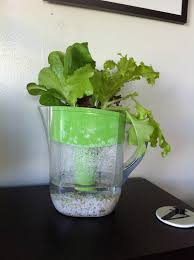 self watering not a pretty garden self watering planter from a brita pitcher