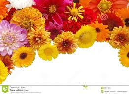 Real Flowers - beautiful border from fresh flowers stock photography image