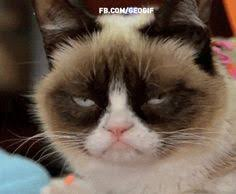 Create A Grumpy Cat Meme - the 25 funniest grumpy cat gifsgrumpy cat 21 grumpy cat gifs