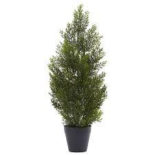 andover mills mini cedar pine tree in pot reviews wayfair