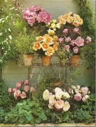 150 best garden roses images on pinterest flowers beautiful