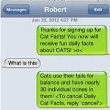 Cat Facts Meme - cat facts text prank by dayne meme center