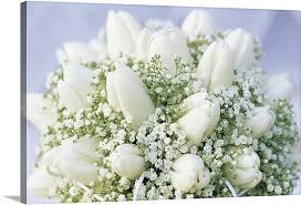 Baby Breath Bouquet Of White Tulip Tulipa Sp Flowers And Baby U0027s Breath