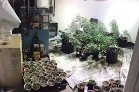 cops bust u0027sophisticated u0027 pot farm in cape home boston herald