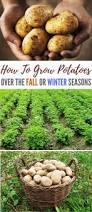 top 25 best winter vegetable gardening ideas on pinterest
