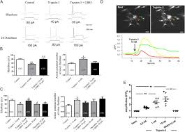 epithelial expression and function of trypsin 3 in irritable bowel
