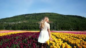 Tulip Field Abbotsford Tulip Fields At Sunrise Youtube