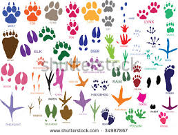 cat paw print stock images royalty free images u0026 vectors