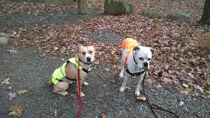 pet sitting north new jersey u2013 tails to scales custom pet services