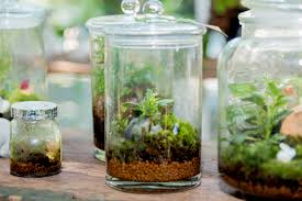 terrariums busting the winter blues with a tiny indoor garden