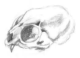 labelled diagram of a monkeys skull similiar rodent skeleton