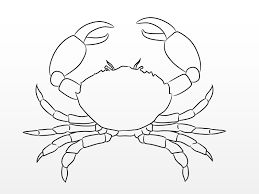 how to draw a crab 10 steps with pictures wikihow