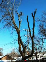 power line tree trimming safety we energies