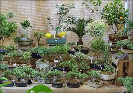 bonsai trees buy in brandywine