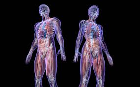 scientists develop camera that can see through the human body