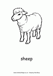 sheep colouring page 2