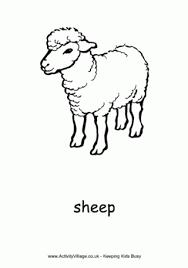 sheep colouring 2