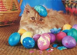 easter eggs wallpapers a easter kitten with color eggs easter eggs wallpapers and