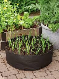 growing garlic in the garlic grow bag kit gardeners com twin