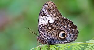 it s true butterfly spots can mimic scary science