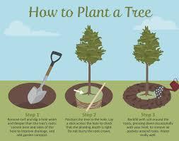 trees to plant solidaria garden