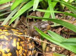 the court yard garden turtle pen