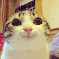 Gato Meme - gato contento sin letrero gatos pinterest cat