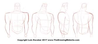 bruce timm style male arm turn around the drawing website