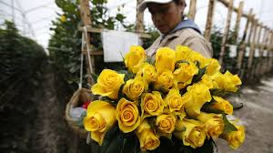 day flowers colombia keeps cocaine from spoiling s day flowers