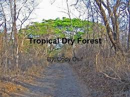 Tropical Dry Forest Animals And Plants - tropical dry forest mylah ferland ppt download