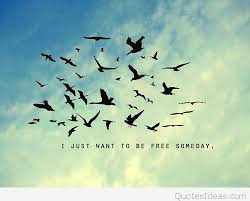 bird freedom hd resolution quote