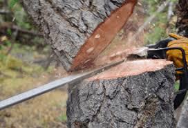 ludivig tree service tree services cloud mn