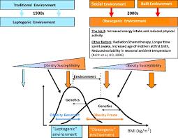 brown adipose tissue circulation