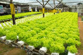Vegetable Garden Blogs by What Are Hydroponic Kits Hydroponic Kitchen Garden Picgit Com