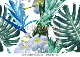 Tropical Flowers And Plants - tropical plants vectors download free vector art stock graphics