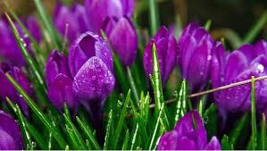 beautiful plants beautiful plants