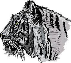 sketch of tiger vector illustration royalty free stock image