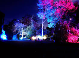trees lit up 2 herodsfoot mine