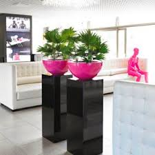 Plants For Office Reigate Office Plant Hire Plants For Offices In Reigate
