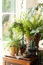 Interior Garden Plants by Best 25 Plant Table Ideas Only On Pinterest Green Decoration