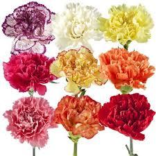 bulk flowers fresh bulk flowers