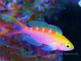 best 25 saltwater fish for sale ideas on saltwater