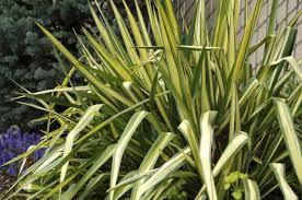 heat loving plants top 10 heat tolerant plants flower gardening birds blooms