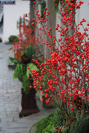 Outdoor Christmas Wreaths by 60 Best Winter Planting Concepts Images On Pinterest Winter
