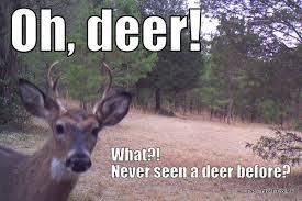 Oh Deer Meme - white faced deer memes